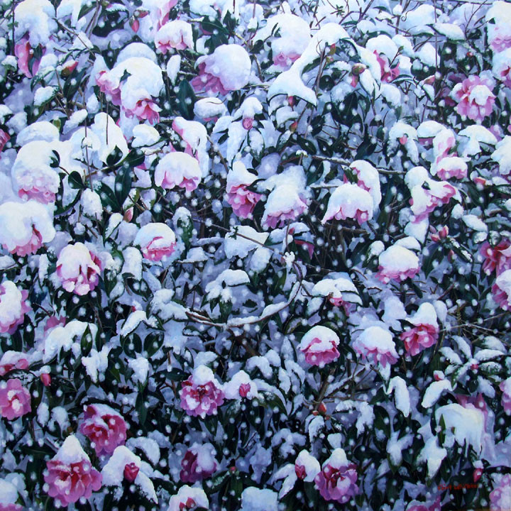 Chris-Whittaker-Camelia--in-Spring-oil-on-canvas_unframed
