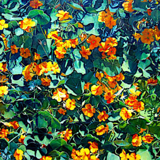Chris Whittaker 'Lock-down Nasturtiums' oil on canvas 100 x 150cm unframed