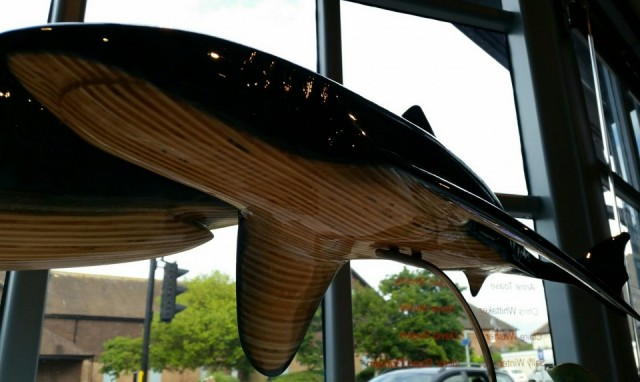 Andy Baerselman shark underside